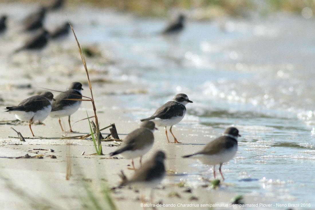 birding_Daniela1